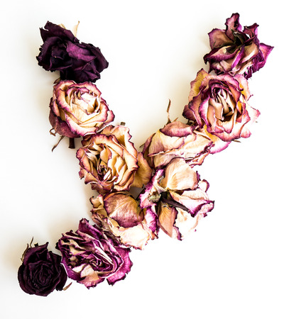 Rose dried Initials letter Y.