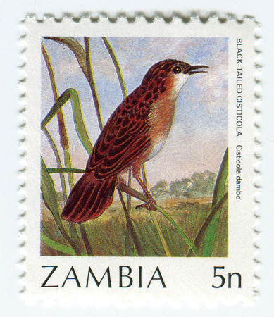 philately: GOMEL, BELARUS, APRIL 5, 2017. Stamp printed in Zambia shows image of  The Black-Tailed Cisticola, circa 1980.