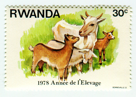GOMEL, BELARUS, APRIL 4, 2017. Stamp printed in Rwanda shows image of  The Year of breeding, circa 1978.