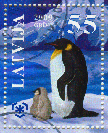 GOMEL, BELARUS, APRIL 8, 2017. Stamp printed in Latvia shows image of  The Penguins (order Sphenisciformes, family Spheniscidae) are a group of aquatic, flightless birds, circa 2009. Editorial