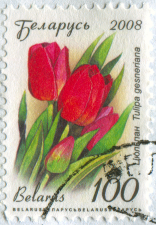 torn: GOMEL, BELARUS, APRIL 13, 2017. Stamp printed in Belarus shows image of  The Tulipa gesneriana, circa 2008.