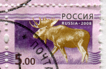 philately: GOMEL, BELARUS, APRIL 13, 2017. Stamp printed in Russia shows image of  The moose or elk, Alces alces, circa 2008.