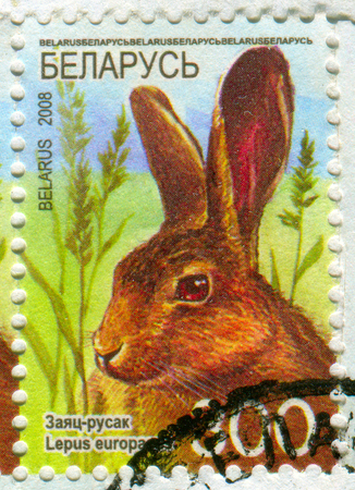 philately: GOMEL, BELARUS, APRIL 10, 2017. Stamp printed in Belarus shows image of  The Lepus europaeus, circa 2008. Editorial