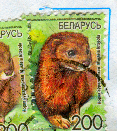 GOMEL, BELARUS, APRIL 13, 2017. Stamp printed in Belarus shows image of  The Mustela lutreola, circa 2008. Editorial