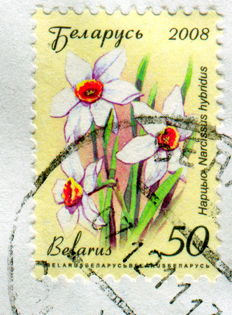 GOMEL, BELARUS, APRIL 10, 2017. Stamp printed in Belarus shows image of  The Narcissus hybridus, circa 2008.