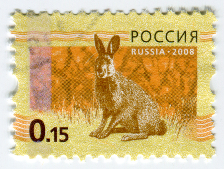 philately: GOMEL, BELARUS, APRIL 13, 2017. Stamp printed in Russia shows image of  The Lepus europaeus, circa 2008.