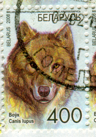 philately: GOMEL, BELARUS, APRIL 15, 2017. Stamp printed in Belarus shows image of  The gray wolf or grey wolf (Canis lupus), also known as the timber wolf or western wolf, circa 2008. Editorial