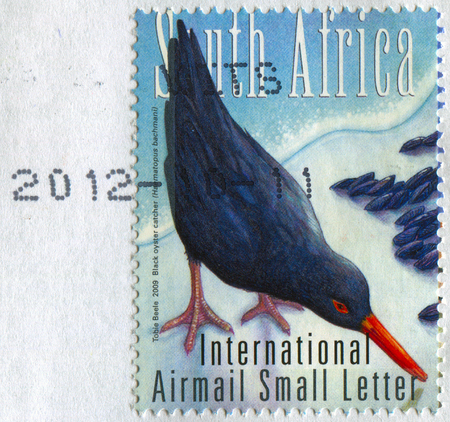 torn: GOMEL, BELARUS, APRIL 16, 2017. Stamp printed in South Africa shows image of  The Black oyster catcher(Habmatopus bachmani), circa 2009. Editorial