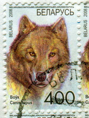 GOMEL, BELARUS, APRIL 15, 2017. Stamp printed in Belarus shows image of  The gray wolf or grey wolf (Canis lupus), also known as the timber wolf or western wolf, circa 2008. Editorial