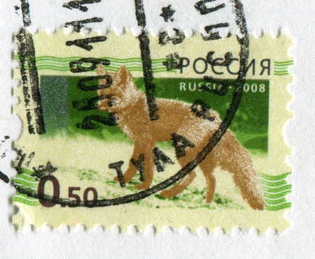torn: GOMEL, BELARUS, APRIL 15, 2017. Stamp printed in Russia shows image of  The Foxes, omnivorous mammals belonging to several genera of the family Canidae, circa 2008.