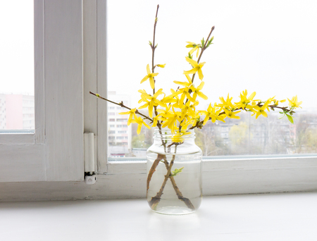 asterids: The flower Forsythia object. Stock Photo