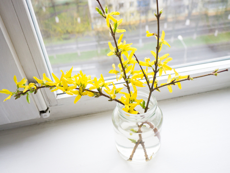 The flower Forsythia object. Stock Photo