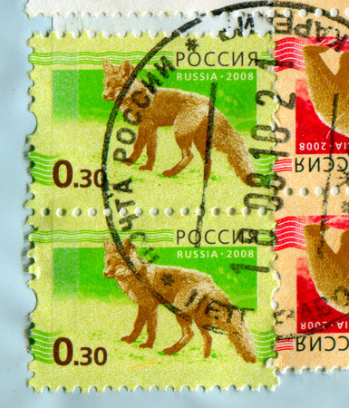 perforated: GOMEL, BELARUS, 13 OCTOBER 2017, Stamp printed in Russia shows image of the Wolf, circa 2008.