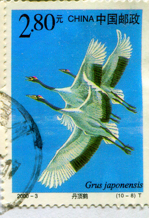 GOMEL, BELARUS, 27 OCTOBER 2017, Stamp printed in China shows image of the Grus japonensis, circa 2000.