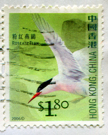 GOMEL, BELARUS, 19 NOVEMBER 2017, Stamp printed in HONG KONG, China shows image of the Roseate Tern, circa 2006. Editorial