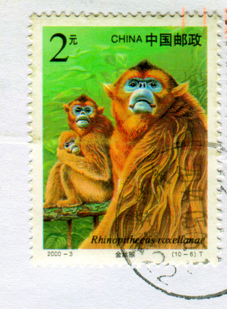 GOMEL, BELARUS, 27 OCTOBER 2017, Stamp printed in China shows image of the Rhinopithecus roxellanae, circa 2000.