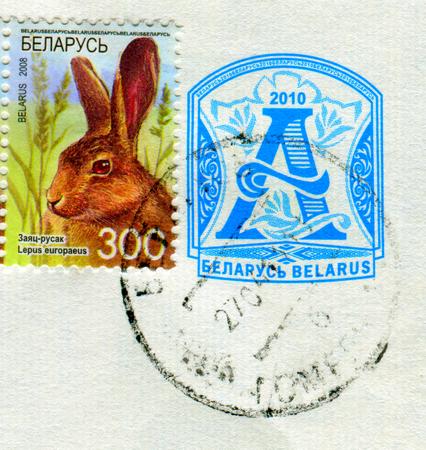 GOMEL, BELARUS, 30 NOVEMBER 2017, Stamp printed in Belarus shows image of the Lepus europaeus, circa 2008. Editorial