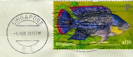 GOMEL, BELARUS, 3 DECEMBER 2017, Stamp printed in Singapore shows image of the Oreochromis mossambicus, circa 2011. Editorial