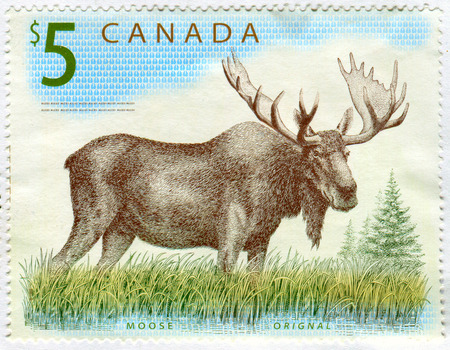 GOMEL, BELARUS, 13 DECEMBER 2017, Stamp printed in Canada shows image of the Moose, circa 2017.
