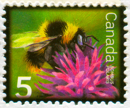 GOMEL, BELARUS, 13 DECEMBER 2017, Stamp printed in Canada shows image of the Bombus Polaris, circa 2017.