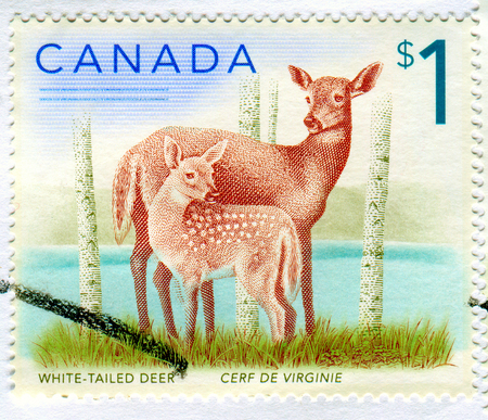 GOMEL, BELARUS, 13 DECEMBER 2017, Stamp printed in Canada shows image of the White-Tailed Deer, circa 2017.