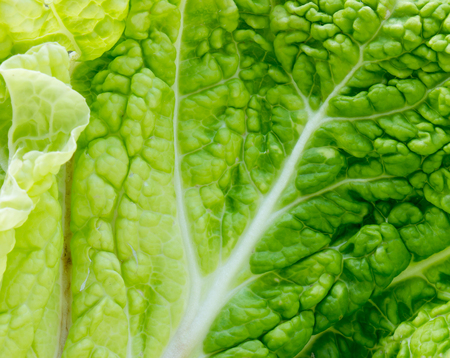 The Cabbage leaf background and texture.
