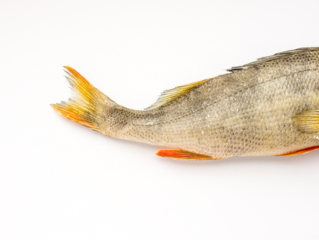 The Dried Fish Perch isolated. Stock Photo