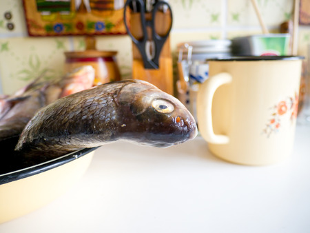 The Kitchen backgrounds and fish objects. Archivio Fotografico