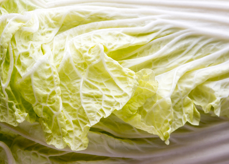 Cabbage background and texture.