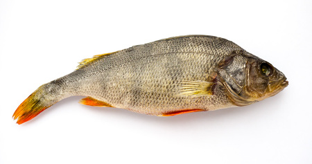 The Dried Fish on a white background. Perch.