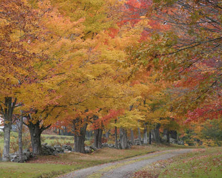excellent fall leaves over vermont road photo