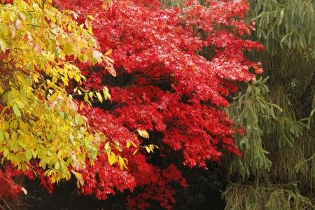 autumn colour: Autumn colour Stock Photo