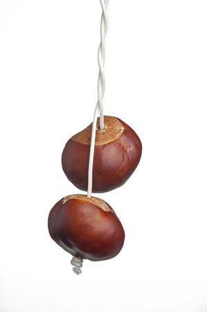 two conkers on twisted string photo
