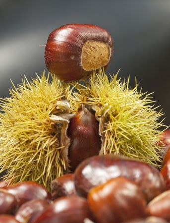 spiky: spiky chestnut case with tasty kernel balanced on top