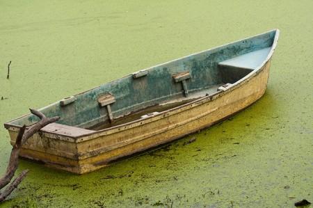lost lake: floating on algae Stock Photo