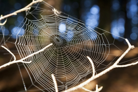 Spider spinning a web Stock Photo