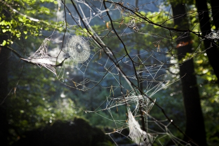 Spiderwebs in forest Stock Photo - 18993921