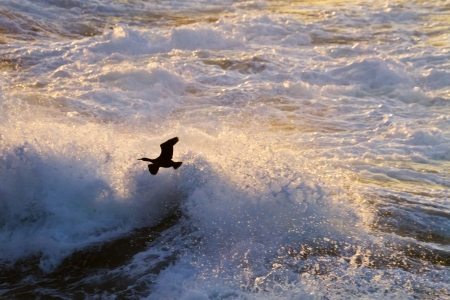 Cormorant in flight Stock Photo