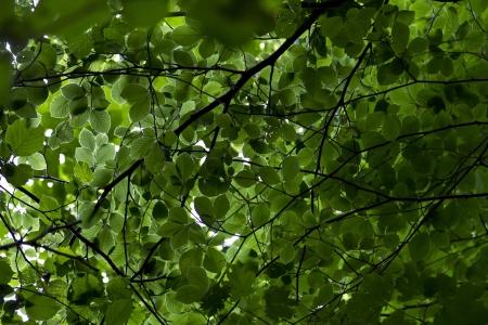 Leafy tree canopy