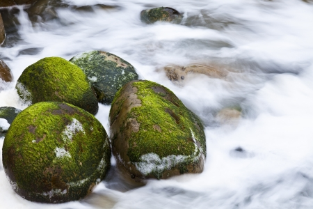 Moss covered rocks in river