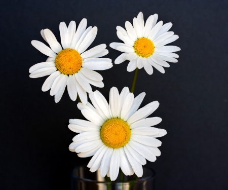 Daisies in a jar Stock Photo