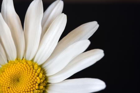 Daisy close up Stock Photo