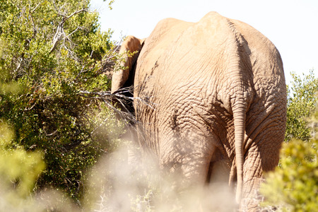 wildlife conservation: Addo Elephant National Park is a diverse wildlife conservation park situated close to Port Elizabeth in South Africa Stock Photo