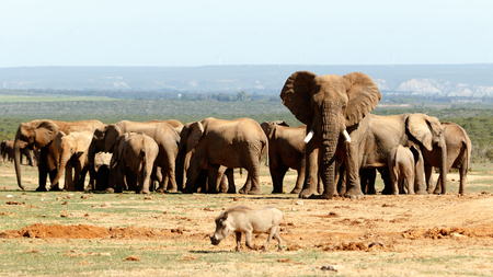 sa: Addo Elephant National Park is a diverse wildlife conservation park situated close to Port Elizabeth in South Africa Stock Photo