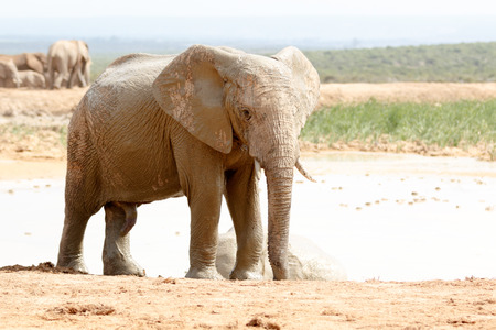 wildlife conservation: The Addo Elephant National Park is a diverse wildlife conservation park situated close to Port Elizabeth in South Africa Stock Photo
