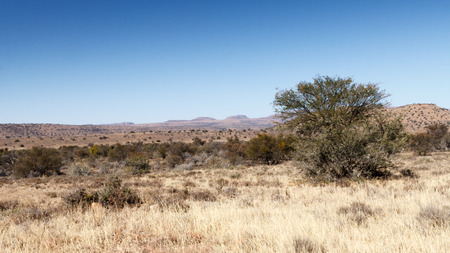 proclaimed: The Tree - Mountain Zebra National Park is a national park in the Eastern Cape province of South Africa proclaimed in July 1937 for the purpose of providing a nature reserve for the endangered Cape mountain zebra.