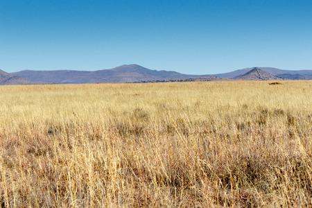 proclaimed: Mountain Zebra National Park is a national park in the Eastern Cape province of South Africa proclaimed in July 1937 for the purpose of providing a nature reserve for the endangered Cape mountain zebra. Stock Photo