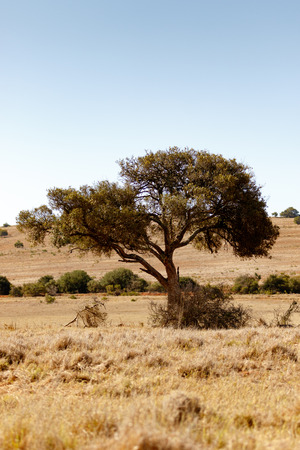 Shade tree in the field pulling to the left. Stock Photo
