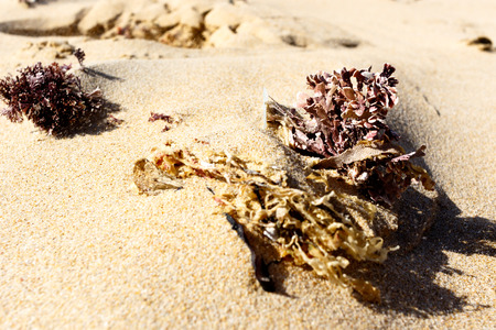 Washed out seaweed on the sand on the beach.