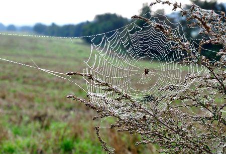 arachnoid: Ragno seduta nel suo web bagnato di rugiada al mattino presto